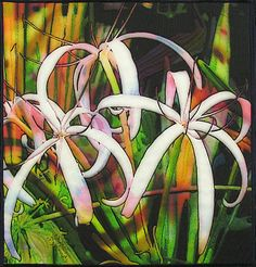 ... Rusin Doran: Quilt Artist on Pinterest | Quilts, Quilting and Bird Art