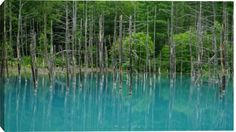 Blue Pond Of Shirogane
