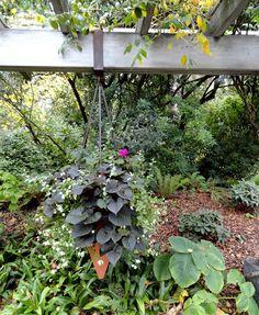 danger garden: Discovering the Pat Calvert Greenhouse at the Washington Park Arboretum