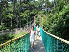 【海云台】山中长桥 녹색 녹색