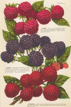 http://www.ursusbooks.com/pictures/thumb/154076.jpg