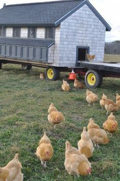 Mobile chicken coop - The idea is that the floor is wire mesh, so the poo fertilizes the ground, and can be moved weekly (or as needed) Raising Backyard Chickens, Keeping Chickens, Backyard Farming, Mobile Chicken Coop, Chicken Coops, Chicken Coop Designs, Chicken Tractors, Chickens And Roosters, Chicken Runs