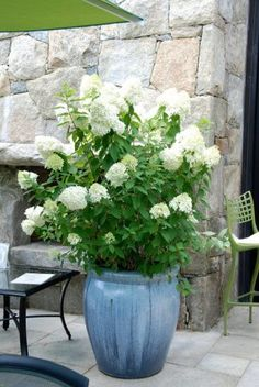 Hydrangea Grows best in warm climate, but can survive pretty much anywhere.