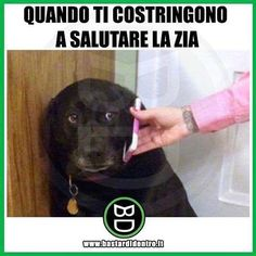 Memes Humor, Funny Photos, Funny Images, Verona, Funny Dogs, Funny Animals, Italian Memes, Video Humour, Funny Test