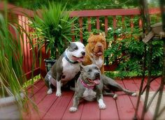 I love Pit bulls!!!!
