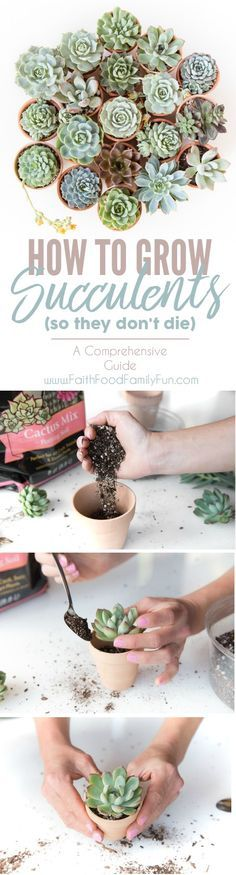to Grow Succulents - A Comprehensive Guide How to Grow Succulents - Everything you EVER needed to know, from watering, soil, light, and everything in between! Totally Pinning this for future reference!How to Grow Succulents - Everything you EVER needed to Succulent Gardening, Succulent Care, Container Gardening, Garden Plants, Gardening Tips, House Plants, Organic Gardening, Plants Indoor, Indoor Gardening