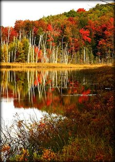 Council Lake, Hiawatha National Forest, Munising, Michigan; photo by .Debby Oliver