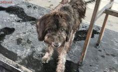 Cadela abandonada em posto de gasolina do Rio precisa de ajuda