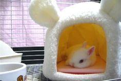 cute bunny habitat