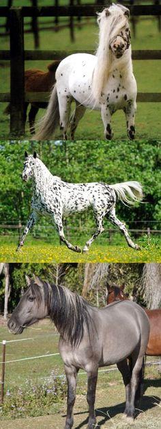 World's RAREST Horse Breeds Ever! (VIDEO) #rarest #rare #breed #horse