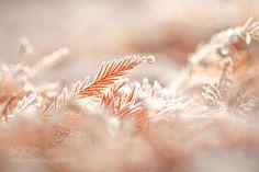 Frosty Beauty - Pinned by Mak Khalaf Macro winterlightbokehbranchfrostdelicatequiet by kimberleigh