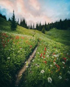 What A Wonderful World, Wonders Of The World, Wild Flowers, Relax, Around The Worlds, Country Roads, Mountains, Amazing, Nature
