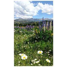 Primavera casi verano en la montaña Spring almost summer in the mountains . . . . . . . . . . . . #spring #summer #primavera #verano #fullflower #llenodeflores #floressilvestres #nativeflowers #SanMartíndelosAndes #Neuquén #Patagonia #Argentina #nature #Neuquénesúnica #instagramers #insta #naturelovers #landscapelover #landscaper #landscape #trav3lr #ig_neuquenarg #visitargentina