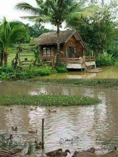 Vivir en un lugar así🌲🌴💕Buena energía,paz,tranquilidad🍀🌷😍 Modern Tropical House, Tropical Houses, House Boat Kerala, Modern Wooden House, Bamboo House Design, Hut House, Asian House, Village House Design, Farm Stay