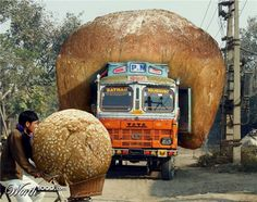 XOO Photo :: Oversized Bread Delivery - Special transport of oversize bakery goods.