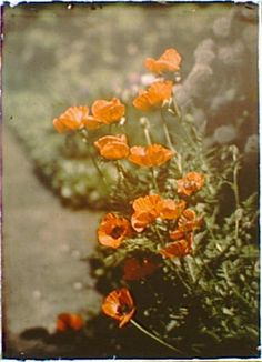 Untitled (autochrome) – Arnold Genthe (1869-1942)