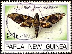 Papua New Guinea.  MOTHS.  DAPHNIS HYPOTHOUS PALLESCENS. Scott 846 A193 Issued 1994 Oct 26, Litho., Perf. 14., 21. /ldb.