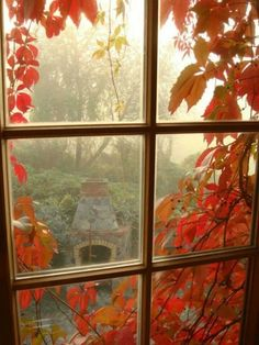 Autumn... from inside