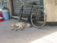 Let sleeping dogs lay?