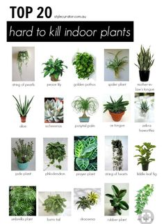 ** Prime 20 Onerous to Kill Indoor Crops l STYLE CURATOR - We've curated our top 20 hard to kill indoor plants. Rubber plant, mother-in-law's tongue and jade plants are just some of the hardy indoor plants that. Plantas Indoor, Rubber Plant, Rubber Tree, Inside Plants, Small Plants, Small Trees, Types Of Plants, Sun Plants, Nature Plants