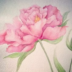 Original watercolor on cotton paper 300 gr. portraying the peonies: a flower that expresses comprehension and acceptance. Measuring about