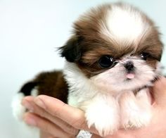 It's sooo fluffy! (Looks a lot like China as a puppy too)