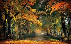 Autumn colours, Gold, For the road, My magic dream, Foggy paths Forest Path, Photography Challenge, Autumn Photography, Landscape Photography, Outdoor Photos, Anne Of Green Gables, Nature Wallpaper, Landscape Wallpaper, Landscape Photos
