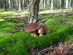 mushrooms, grandes, eh, muy grandes