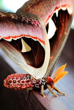 Wow What a Beautiful Moth