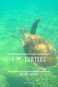 I absolutely love turtles! And snorkeling. And Mexico. And the beach. And the sea. :)