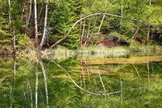 """""""the mirrored tree"""" von Bernd Hoyen #fotografie #photography #fotokunst #photoart #digitalart #kunst #art #abstrakt #abstract #wald #wälder #forest #forests #baum #bäume #tree #trees #grün #green #see #seen #sea #seas #spiegelung #spiegelungen #reflection #reflections #wasserspiegelung #wasserspiegelungen #natur #nature #landschaft #landschaften #landscape #landscapes #deutschland #germany #saarland"""