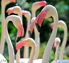 Fotografia HELLOssss s s. de bug eye :) na Flamingo Art, Pink Flamingos, Beautiful Birds, Beautiful World, Greater Flamingo, Pink Bird, Pink Feathers, Birds Eye View, Animals Of The World