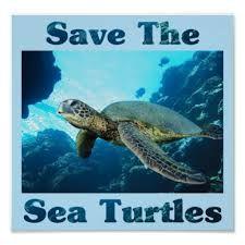 Save The Sea Turtles