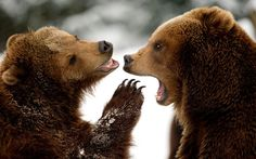 The Week in Pictures: Animals, March 16 – March 22, 2013