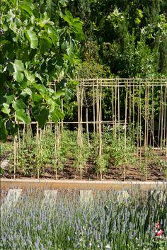 Un huerto en el jardín - TELVA