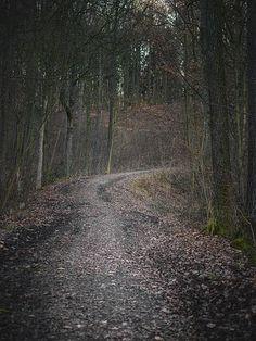 Bosque, Ruta Del Bosque