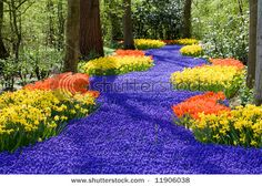 Narcissus, tulips, and muscari? Would love to have this in my yard.