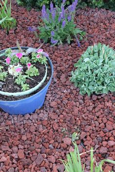 Killing Them Softly With Their Mulch >> 10 Desirable Mulch Alternative Images Ground Cover Plants Garden