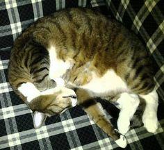 Tito is sooo comfortabuhls...