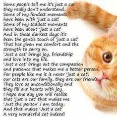 Cat Care Health Quotes Only Cat Owners Will Understand - Short, simple, and sweet – these cat sayings are the cherry on top of our resource of cat quotes. See the sheer, undeniable kitty essence immortalized in these 34 quotes for cat lovers. Cute Kittens, Cats And Kittens, Kitty Cats, Tabby Cats, Ragdoll Kittens, Bengal Cats, Crazy Cat Lady, Crazy Cats, Cat Poems