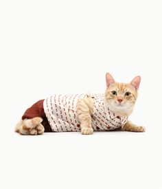 {Caturday: fashionable cats}