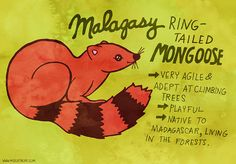 365 Days of Animals by My Zoetrope 170: Malagasy Ring-Tailed Mongoose Pen/Ink/Digital