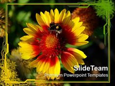 Flower With Honey Bee Nature PowerPoint Templates PPT Themes And Graph by PPT_Templates via authorSTREAM