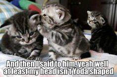 Aww how sad!! Look at the kitties face@