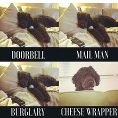 Funny Dog Memes, Funny Dogs, Silly Dogs, Cute Dogs, Dog Humor
