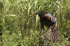 Thomson Reuters Foundation - East Africa food scheme aims to stop the rot, boost trade. The project, which is being led by and funded by , will help link and buyers in and to link up. Tanzania, Kenya, Thomson Reuters, International Development, East Africa, People Around The World, Uganda, Farmers, Charity