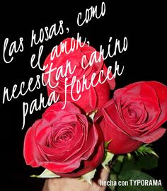#love and #roses #need #care for #blooming
