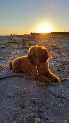 Stay at the spacious, 5-bone Signal Inn and let Fido relax on the beach in Sanibel, FL!