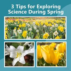 Explore the wonderful world of science this spring! Come read this three tips to help you maximize the potential of the season. Teaching Science, Science Activities, Science Projects, Spring Projects, Nature Study, Wonders Of The World, Homeschool, Seasons, Explore