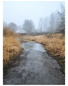 "David Crompton | Vancouver Art, design, photography. From photo book ""Common"" Image of Common #03"